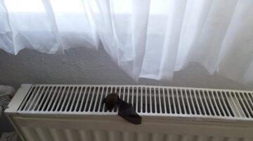 Nevşehir'de eve giren yarasaları itfaiye ekipleri çıkarttı