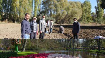 Mustafapaşa'da lale üretimi başladı