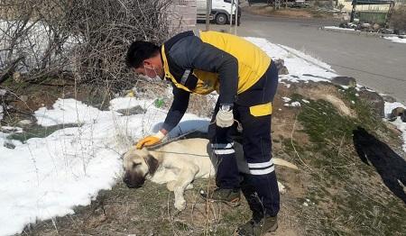 Gözleri görmeyen sokak köpeğine Nevşehir Belediyesi sahip çıktı