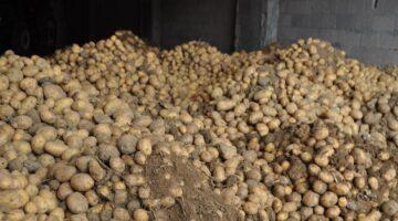 Tekirdağ Belediyesi 250 ton patates alacak
