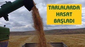 Ürgüp ve köylerinde arpa ve buğdaylar biçilmeye başladı