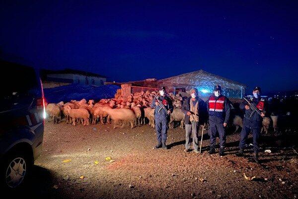 Derinkuyu'da kayıp olan hayvanlar Jandarma tarafından bulundu