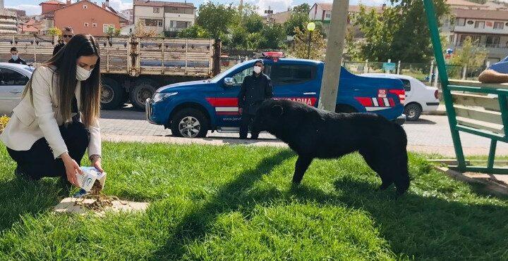 Gülşehir'de sokak hayvanları için mama bırakıldı